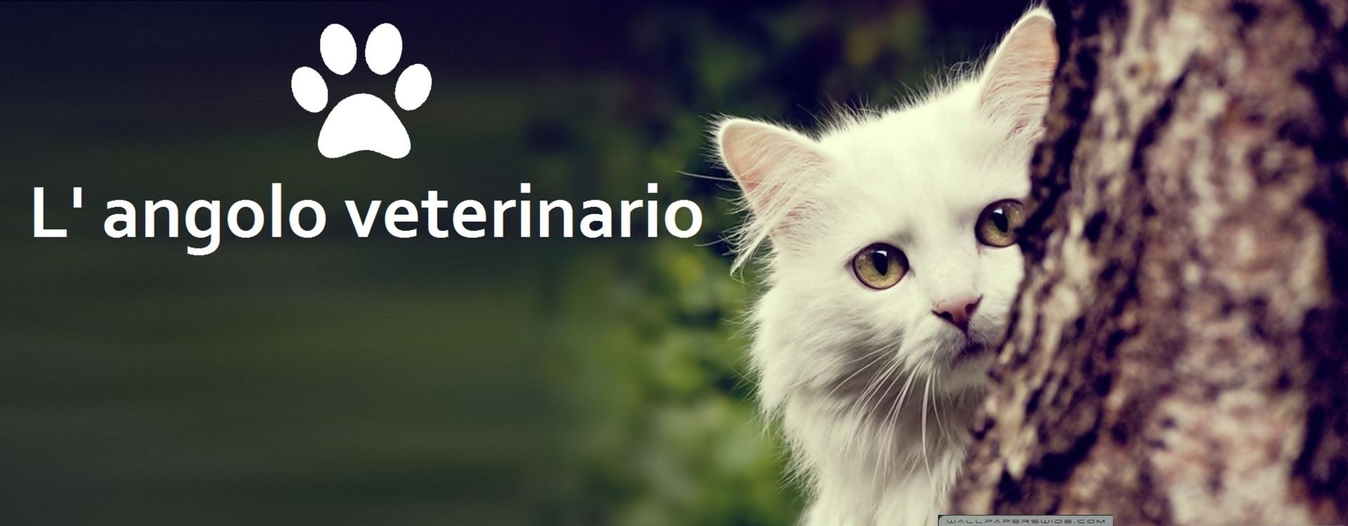Scopri l'angolo veterinario