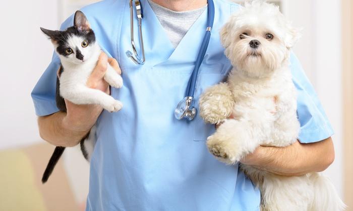 I disturbi renali cronici nel cane e nel gatto