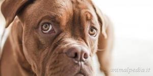 Allergie e disturbi cutanei del cane e del gatto